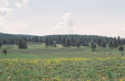 View from the road of the 70 acre property and cabin.