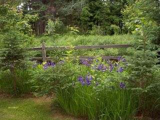 Lamoine lodge photo - .A Garden Photo