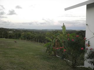 Vieques Island property rental photo - Yard with banana & lemon trees