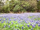 Blunn Creek is also a wonderful place to experience Springtime wildflowers!
