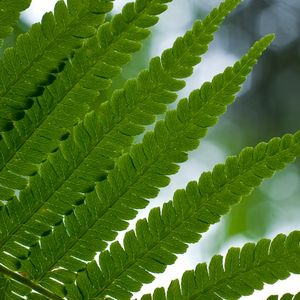 Ferns of many varieties
