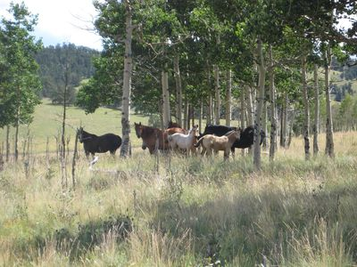Guffey farmhouse rental - Horses at Aspen Creek Ranch standing in aspen trees