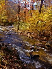 Bryson City cabin photo - Fall foliage colors at Carolina House on Alarak Creek