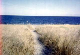 Sagamore Beach cottage photo - Path to beach