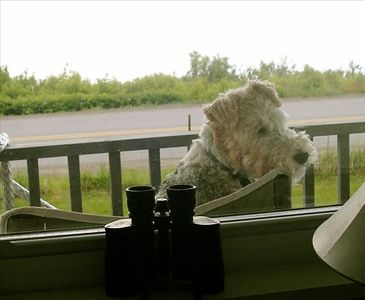 Even your dog will enjoy the view! Here's our wire hair fox terrier, Lucy.