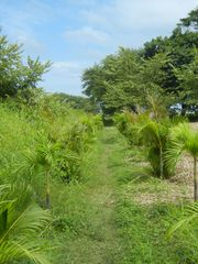 Nosara house photo - The palm-lined private path to Playa Guiones, only a 4 minute walk to the beach