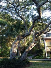 Fernandina Beach townhome photo - Trees give cool, relaxed feeling to complex.