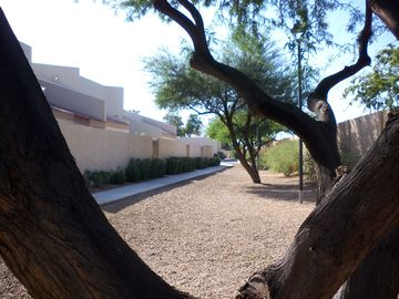 Glendale townhome rental - Mesquite lined walkways throughout property