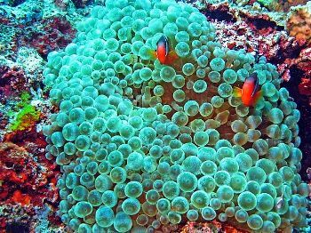 on our reef