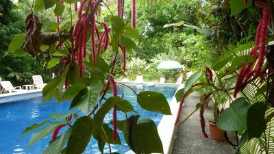 Manuel Antonio house rental - Pete's Huge Pool Set In The Jungle