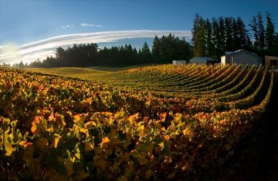 Many beautiful wineries in area/fall colors are gorgeous!