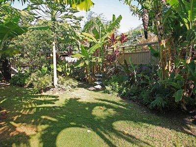 Yard with banana trees, papayas and flowers