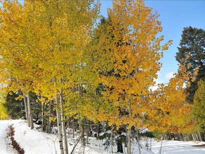THE COLORS OF THE ASPENS