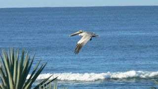 Playa Negra house photo - Sea Soldiers fly by daily