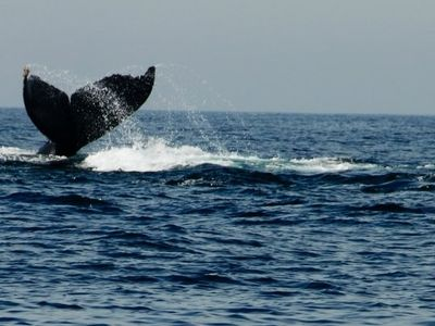 go whale watching!! Incredible.