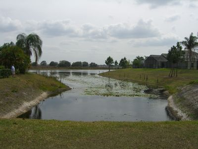 Views of the lily lake