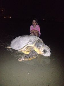A recent guest with a Giant Sea Turtle that came ashore to lay eggs.