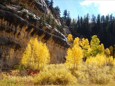 Some beautiful fall foliage up Cedar Canyon.