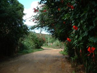 Ferradurinha villa photo - beautiful road on the way to the house