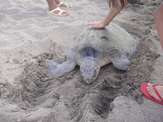 Pochomil house photo - You can pet the turtles as they come out to lay eggs in front of the house!