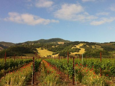 Nearby Vineyard on Sonoma Highway