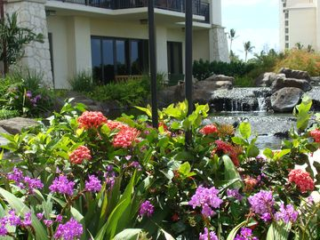 Beautiful Tropical Landscaping