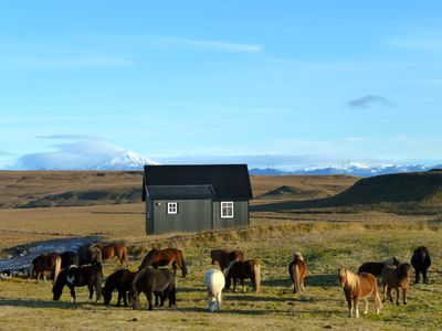 Bjalli, volcano Hekla and our herd of horses in september