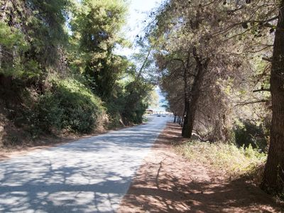 The road to the beach through the pine forest