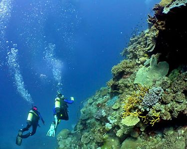 Scuba Diving.   The best diving is in the East End.  More dive sites here.