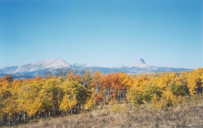 Fall colors with snow capped Glacier Park/Rocky Mountains/Chief Mtn in backgrnd.