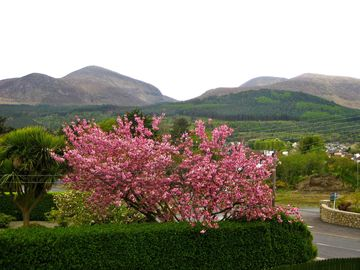 View in springtime