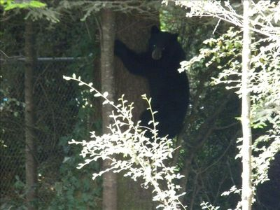 Crescent City house rental - Bear off of Elk Valley road.