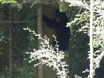 Bear off of Elk Valley road.