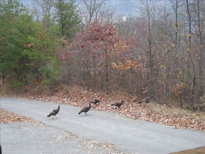 Pigeon Forge cabin rental - Turkeys walking across the driveway-you can see a variety of wildlife here!