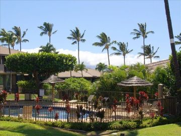 Kaanapali condo rental - Sea Turtle Mosaic Pool from Condo's Lanai