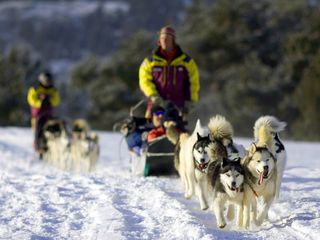 Keystone condo photo - Dogsledding