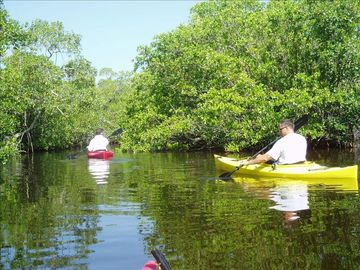 Kayaking through Mangrove Reserve near Palm Villa