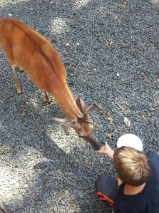 Get up close and personal with the deer