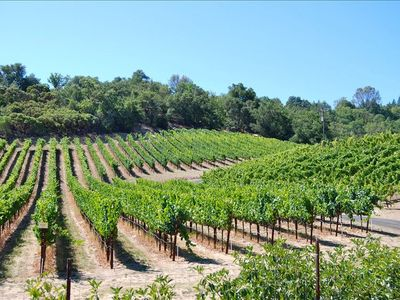 Healdsburg cottage rental - Our Vineyard