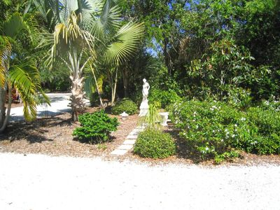 Beautiful garden with lots of tropical plants