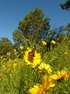 Step outside and hike on our private trails and see beautiful wildflowers