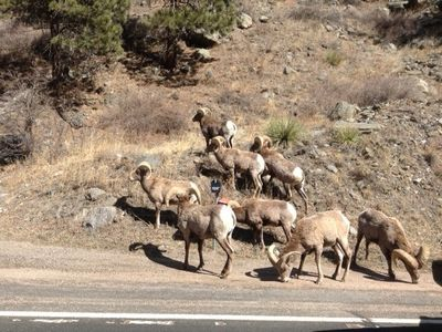 Big Horn sheep--such a treat to see!