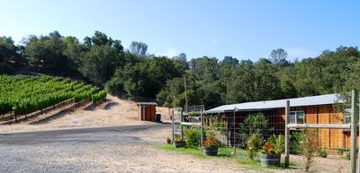 Healdsburg cottage rental - Our Vineyard adjacent to the cottage