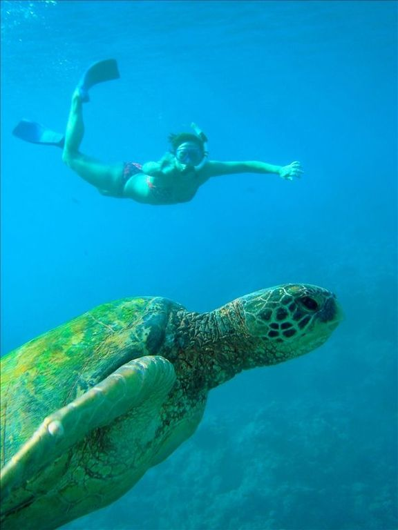 Green Turtle and Diver near condo
