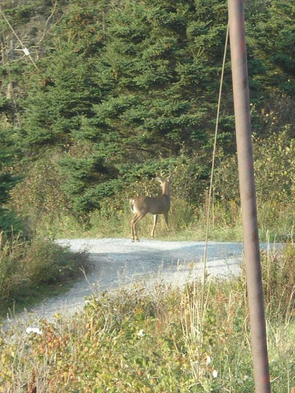 Wildlife on the Canada Trail beside the house