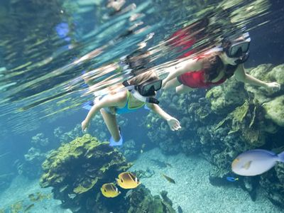 There are many wonderful snorkeling sites near us, including Kahalu'u Beach Park