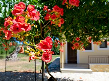 See Corfu budget friendly house in a quiet farm