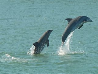 Sanibel Island house photo - Enjoy the dolphins which you see often just blocks away!