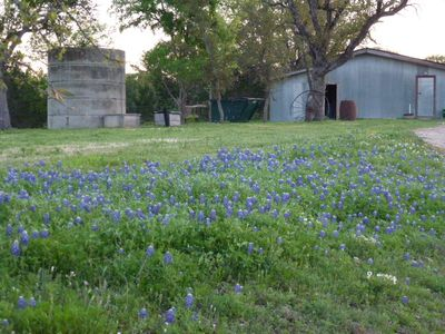 Our bluebonnet patch is growing larger and larger each Spring!