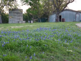 Lampasas house photo - Our bluebonnet patch is growing larger and larger each Spring!